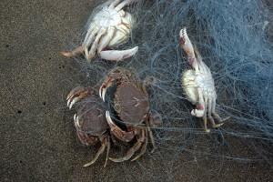 ビーチで網を投げるだけ(提供:玉置標本)