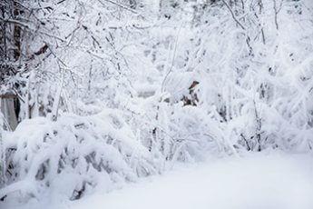 大雪(イメージ)