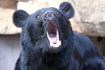 クマは鼻が弱点!?(※写真はイメージ)