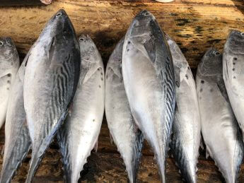 【スリランカ・ニゴンボ】カレーに潜んだ鰹節の旨味