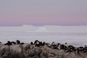 日本人女性研究者が「南極」で目撃した「アデリーペンギン」の「悲劇」と「不思議」