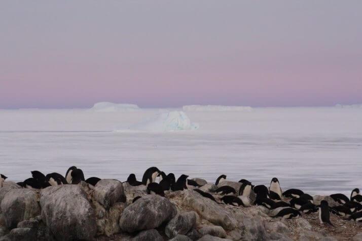 日本人女性研究者が「南極」で目...