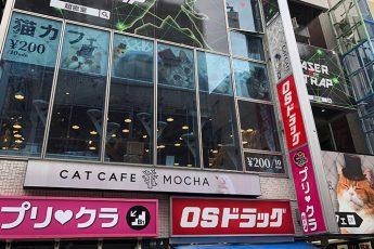 猫カフェ「モカ」