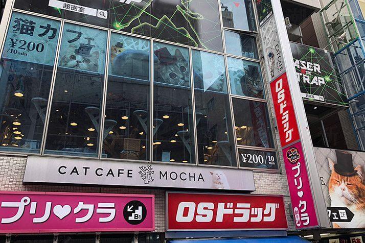 名古屋 猫カフェ モカ