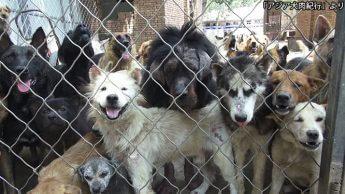 「アジア犬肉紀行」より