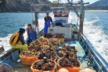韓国「禁輸」石巻名物「ホヤ」復活を目指す「若手漁師」らの奮闘